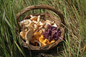 Mushroom Butter
