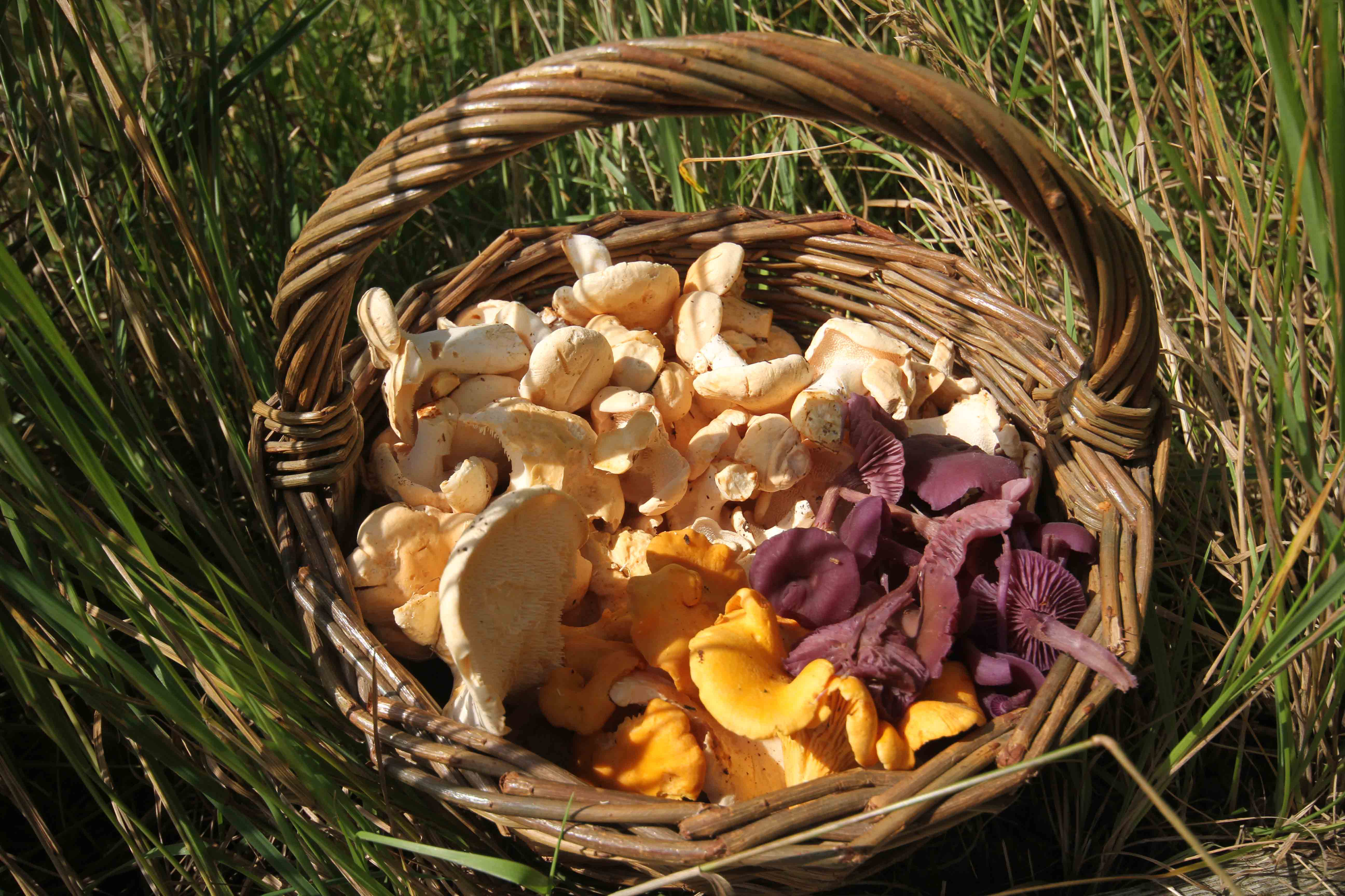 Led by experienced guide, Daniel Butler, these breaks are targetted at the  beginner. They seek to de-mystify fungi: to guide the novice through the  good, ...