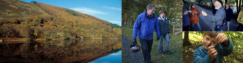 foraging holiday wales