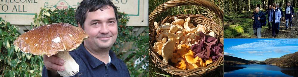 fungi forays wales