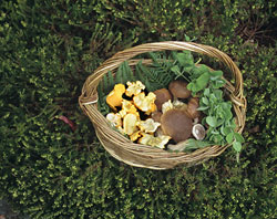 Pearl Barley and Wild Mushroom Risotto