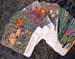 Edible Mushroom Field Guide